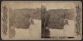 The Playground Pool, Prospect Park, Brooklyn, N.Y, from Robert N. Dennis collection of stereoscopic views.png