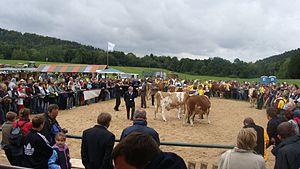 Pogórze Bukowskie - Image: The autumn cattle exhibition in Rudawka Rymanowska