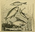 The book of the aquarium and water cabinet; or Practical instructions on the formation, stocking, and management, in all seasons, of collections of fresh water and marine life (1856) (20209366759).jpg