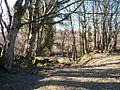 The east bank of Afon Dwyfor - geograph.org.uk - 1763278.jpg