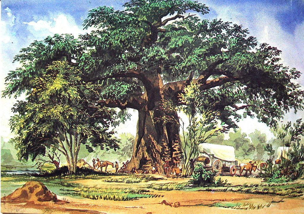 Baines baobabs botswana s ancient oasis africa geographic for Baobab jardin