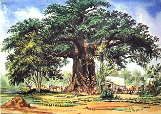 Thomas Baines - Baobab Tree, South Africa. Watercolour, 29 December 1861
