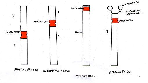 510px-Tipologiecromo.jpg
