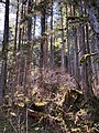 Tongass National Forest with Sunlight.jpeg