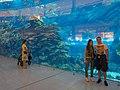 Tourism in Dubai توریست ها در کشور امارات، شهر دبی 01.jpg