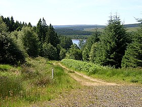 Track in Kielder Forest - geograph.org.uk - 204447.jpg