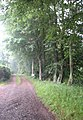 Track in to the woods at Luffness - geograph.org.uk - 1378378.jpg