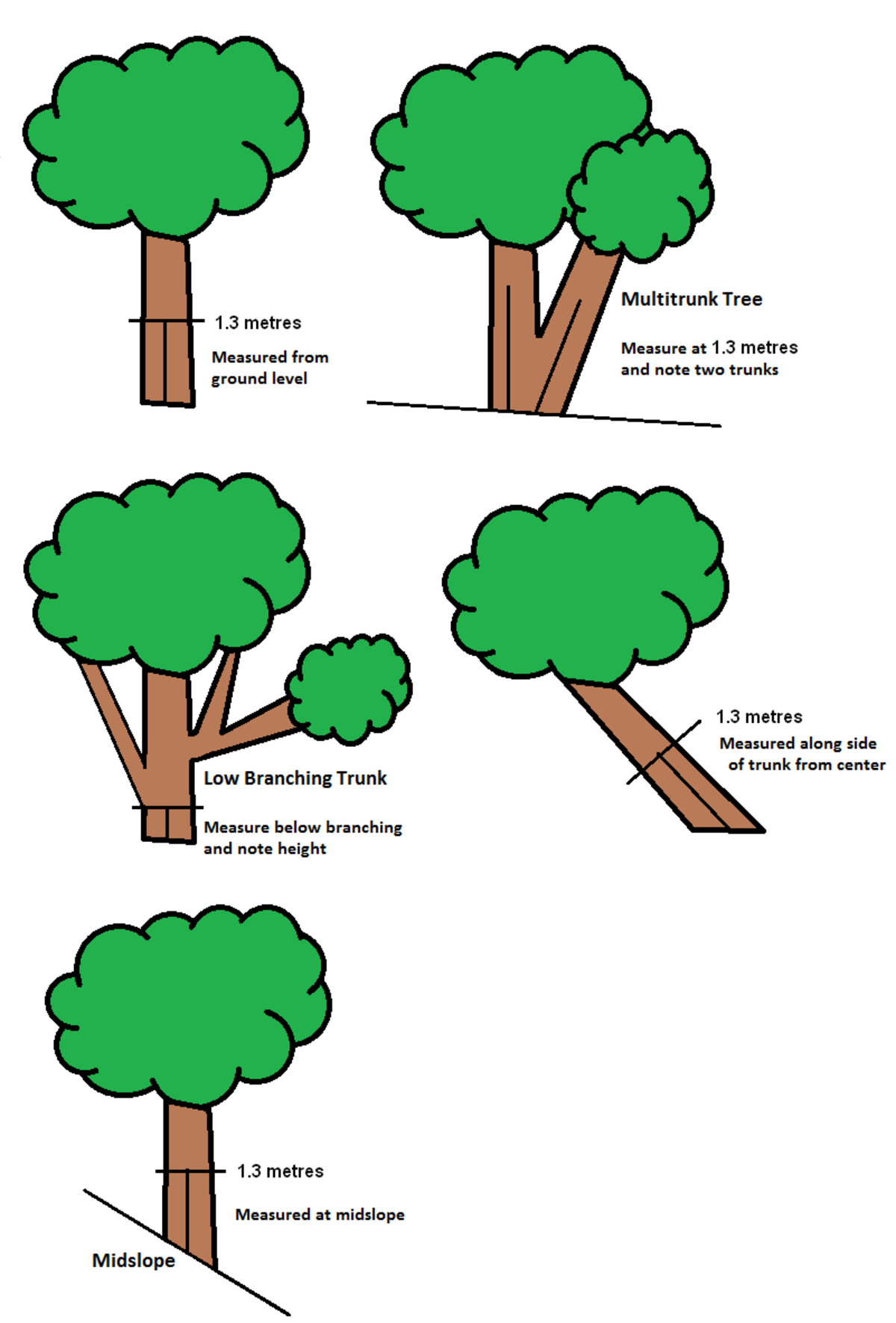 Tree girth measurement wikipedia What is the meaning of tree