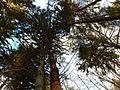 Trees - panoramio (55).jpg