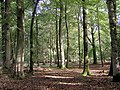 Trees in the Denny Inclosure, New Forest - geograph.org.uk - 256006.jpg