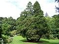Trelissick Gardens - geograph.org.uk - 1477486.jpg