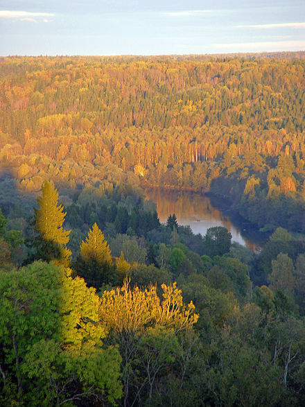 Latvia has the fifth highest proportion of land covered by forests in the European Union. Turaidas skats uz Gauju 2okt04.JPG