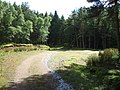 Turning circle in woodland - geograph.org.uk - 490358.jpg