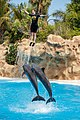 Tursiops truncatus - Loro Parque 01.jpg