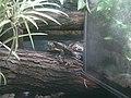 Turtles (7822201190).jpg