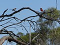 Two Birds at Gundabucha.jpg