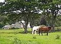 Two Horses - geograph.org.uk - 472282.jpg