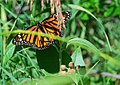 Two Ponds - Monarch (21192670554).jpg