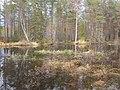 Tysjöarna-Jämtland-Sweden 05.jpg