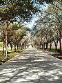 UTPA Tree Walkway - panoramio.jpg
