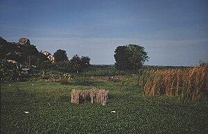 Ukerewe Island - Image: Ukerewe Felder