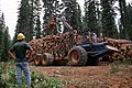 Umatilla National Forest, salvage thinning Badger TS (36878547945).jpg