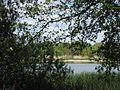 Upper Lusatian Heath and Pond Landscape. Oberlausitzer Heide- und Teichlandschaft. Landkreis Görlitz, Saxony, Germany. - panoramio (1).jpg