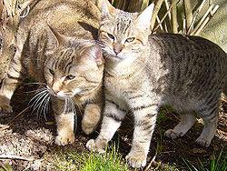 Deux chattes de france - 3 part 2