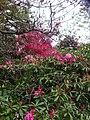 Van dusen botanical garden may 2012 - panoramio (1).jpg