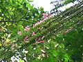 Vegetación de la Reserva de la Biosfera La Amistad Panama (RBLAP) 41.JPG