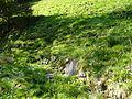 Vermutliche Reste des Urgrabens oberhalb des Nazihofs.jpg