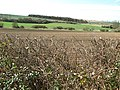 View across the Bourn Valley - geograph.org.uk - 745043.jpg