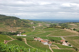Rhône (department) - Image: View from Chiroubles Cru Beaujolais