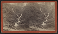 View of cascades, from Robert N. Dennis collection of stereoscopic views.png