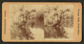View of palm trees along the Oklawaha River, Fla, from Robert N. Dennis collection of stereoscopic views.png