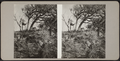 View of trees and bushes, from Robert N. Dennis collection of stereoscopic views.png