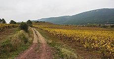 Vineyards in Prades-sur-Vernazobre 01.jpg