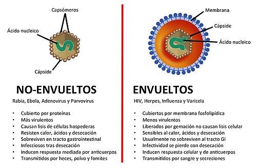 Virus envueltos y no envueltos.jpg