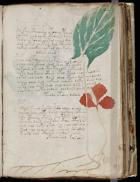 File:Voynich Manuscript (83).jpg