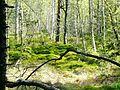 Waldmoor-Torfstich, Würzbacher Moor - panoramio (2).jpg