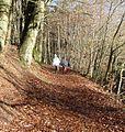 Waldweg zum Rahnenhof - panoramio - Immanuel Giel.jpg