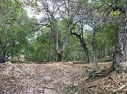 Walnut forest in Arslanbab.jpg