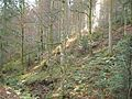 Wandern im November in Todtmoos - panoramio.jpg