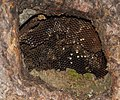 Wasp nest - geograph.org.uk - 915659.jpg