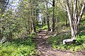 Waterrock Knob trail, May 2017 2.jpg