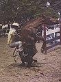 Werner Haberkorn - Evento esportivo - rodeio (cropped).jpg