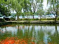 West Lake 西湖 - panoramio (6).jpg