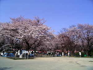 West Park (Sendai) in the cherry blossom season.jpg