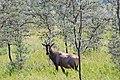 Western Serengeti 2012 06 02 3998 (7557766236).jpg
