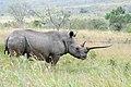 White Rhinoceros (2875208072).jpg